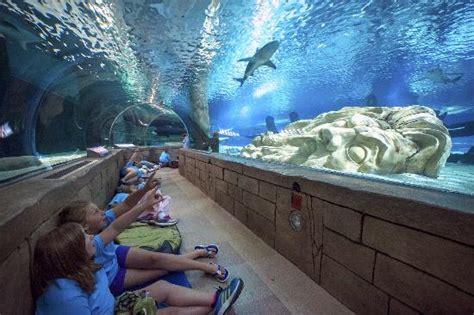 beat the winter blues sea minnesota aquarium