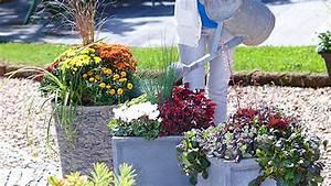 Gräser Kübel Terrasse : stauden in k bel pflanzen oase auf balkon und terrasse ~ Markanthonyermac.com Haus und Dekorationen