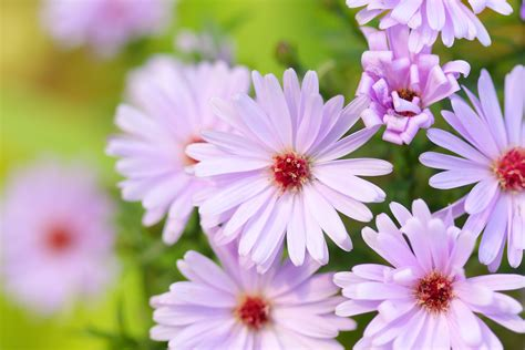 des plantes 224 floraison longue pour un jardin fleuri toute l 233 e