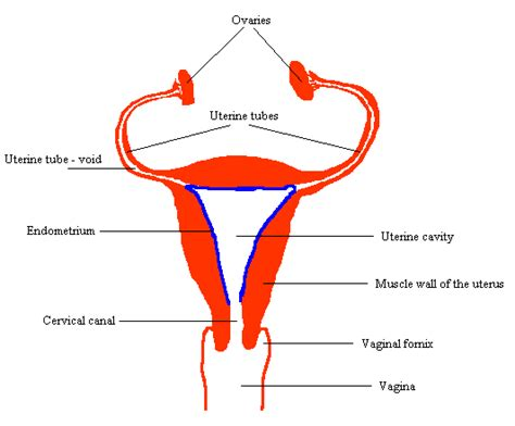 what is uterine lining