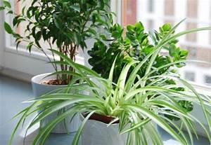 Pflanzen Für Wohnzimmer : pflanzen im wohnbereich welche gr npflanzen sind geeignet artikelmagazin ~ Markanthonyermac.com Haus und Dekorationen