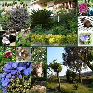 Garten Im Mai : el mundo de daniela danielas welt mein garten im mai eine rosenexplosion mi jardin ~ Markanthonyermac.com Haus und Dekorationen