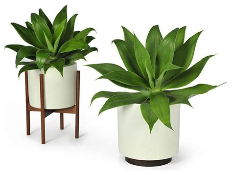 modernica study planter w plinth white modern indoor pots and planters by horne