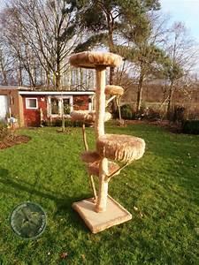 Kratzbaum Echter Baum : kratzwas naturholzkratzb ume jeder baum ein unikat einzigartig wie deine katze ~ Markanthonyermac.com Haus und Dekorationen
