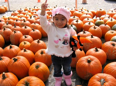 Pittsburgh Pumpkin Patch 2015 by Pumpkin Patches In Pittsburgh 2016 Sand And Snow