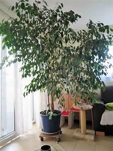 Sichtschutz Pflanzen Blühend : sichtschutz kleinanzeigen pflanzen garten ~ Markanthonyermac.com Haus und Dekorationen