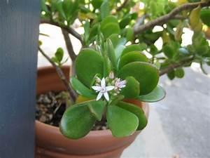 Feng Shui Pflanzen Reichtum : welche feng shui pflanzen sollten sie laut feng shui im haus und garten haben ~ Markanthonyermac.com Haus und Dekorationen