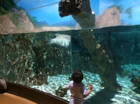 esculturas submersas photo de aquarium sea val d europe marne la vall 233 e tripadvisor