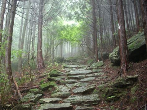 ancient mountain forest path by