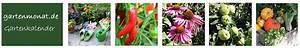 Garten Was Tun Im März : gartenkalender online was im garten zu tun ist nach monaten welche gartenarbeiten fallen an ~ Markanthonyermac.com Haus und Dekorationen