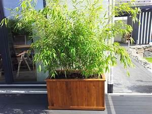 Immergrüner Sichtschutz Im Kübel : bambus pflanzenshop bambus als k belpflanze auswahl und pflege ~ Whattoseeinmadrid.com Haus und Dekorationen