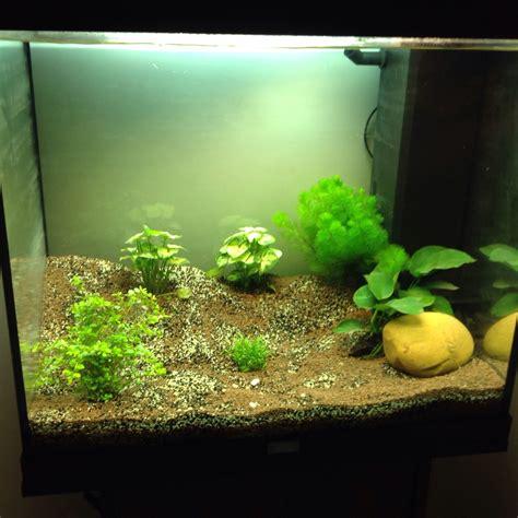 poisson aquarium d 233 butant images