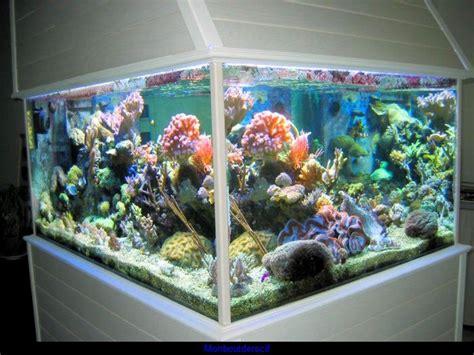 aquarium eau de mer cubique