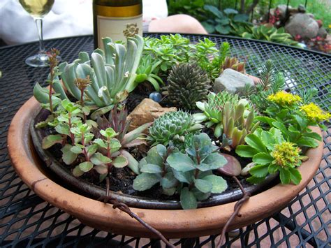 Succulents Are Succulent; They Make Me Happy  Garden Drama