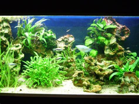 d 233 cors pour aquariums d eau douce aquaroche
