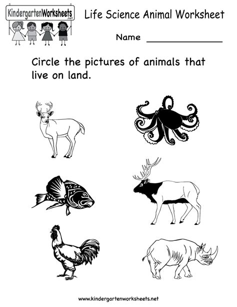 12 Best Images Of Animal Worksheets For Kindergarten  Free Kindergarten Science Worksheets