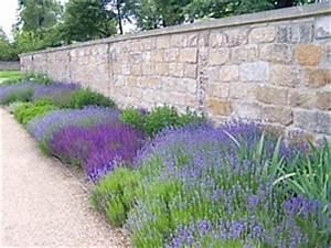 Mediterraner Garten Winterhart : lavendel schneiden pflege lavandula angustifolia duftlavendel ~ Markanthonyermac.com Haus und Dekorationen