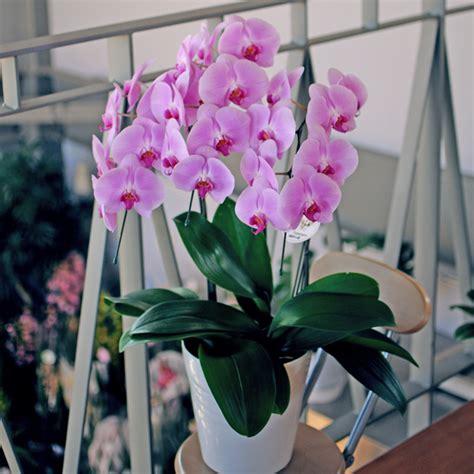 7 fleurs pour balcon qui l 233 gayeront au cours de l hiver