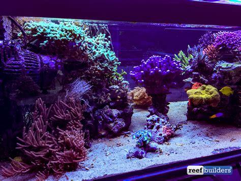 the supernatural reef tank of seabox aquarium coral featured reefs marquee reef tanks