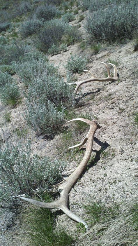elk sheds http www monstermuleys photos