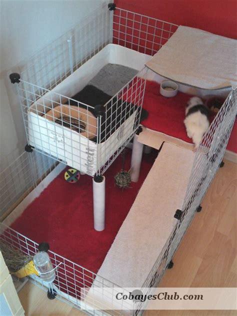 cavy cage cochon d inde