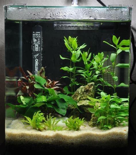 nano aquarium tous les messages sur nano aquarium une bulle violette