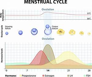 Acupuncture Painful Menstruation Relief Finding
