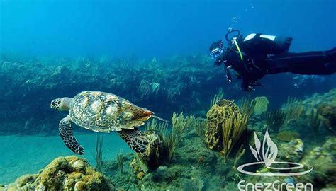 le plongee sous marine 28 images offrez vous une semaine de plong 233 e sous marine envie d