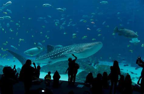 aquarium la rochelle un des plus grands aquariums priv 233 s europ 233 ens
