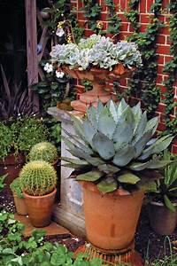 10 Outstanding Succulents - FineGardening