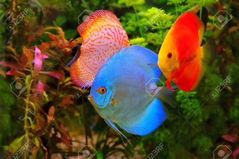 aquarium eau douce poisson poisson naturel