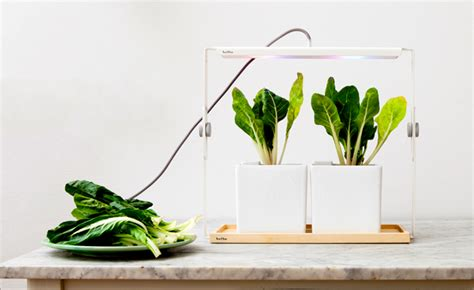 Designcentric Indoor Plant Lights For Urban Living