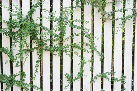 3 Ways To Make Fences More Attractive