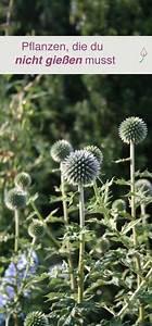 Sichtschutz Pflanzen Blühend : die besten 25 winterharte pflanzen ideen auf pinterest winterharte pflanzen f r balkon ~ Markanthonyermac.com Haus und Dekorationen