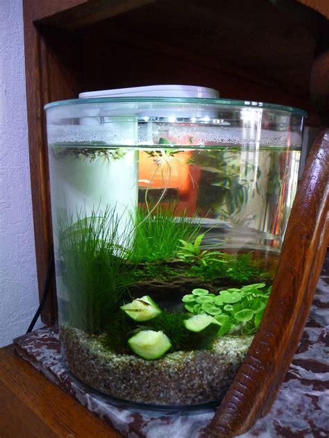 25 best ideas about crevette aquarium on sommets de l adolescence aquarium d eau
