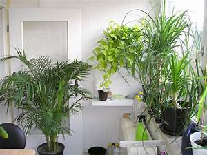 Pflanzen Für Wohnzimmer : pflanzen im schlafzimmer pflanzenfreunde ~ Markanthonyermac.com Haus und Dekorationen