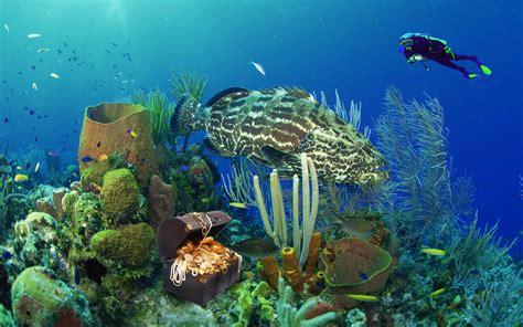 A Treasure Hunt Under The Sea