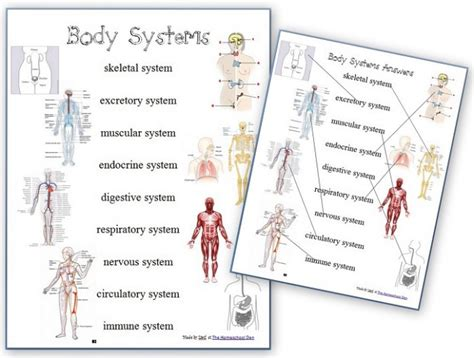 Free Worksheets Human Body Systems  Free Homeschool Deals