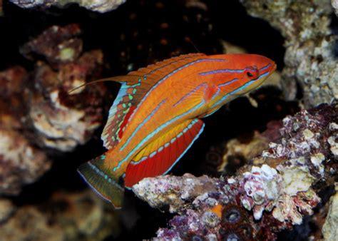 le plus beau poisson d aquarium page 3