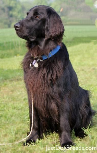 more small breeds of dogs breeds picture