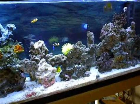 ultra clear saltwater marine aquarium with home made filter april 2013
