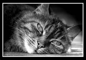 Schwarz Weiß Kontrast : stubbsi schwarz weiss foto bild tiere haustiere katzen bilder auf fotocommunity ~ Markanthonyermac.com Haus und Dekorationen
