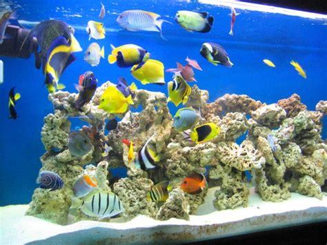 les probl 232 mes et les solutions dans l aquarium r 233 cifal