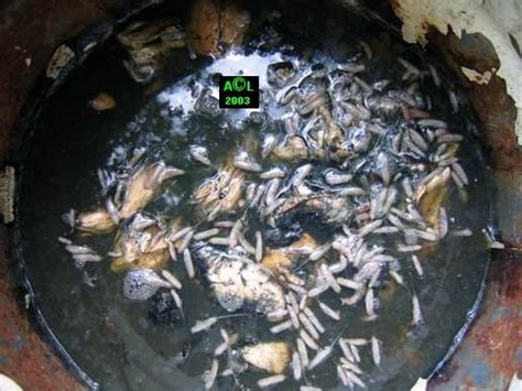 dr 244 le de b 233 b 233 te dans mes toilettes aquariums et vivariums forum animaux