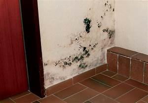 Staubige Wohnung Was Tun : wie entsteht schimmel in der wohnung was kann ich dagegen tun getifix gmbh ~ Markanthonyermac.com Haus und Dekorationen