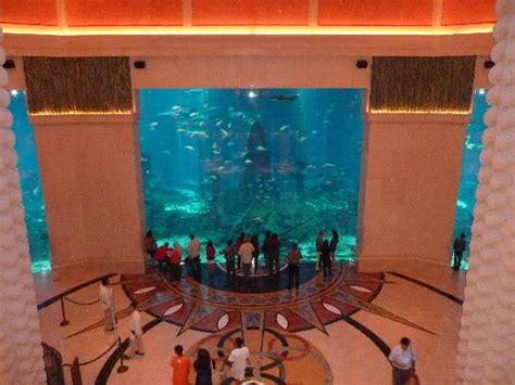 the aquarium picture of atlantis the palm dubai tripadvisor