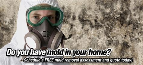 Mold Removal Services Ottawa  Ottawa Mold Removal