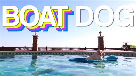 Boat Dog Captions by Funny Boat Dog Meme Comp Youtube