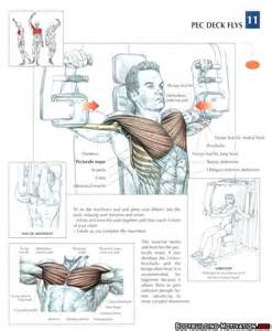 63 best images about strength anatomy on foot anatomy cable and triceps