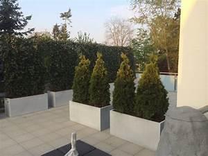 Immergrüner Sichtschutz Im Kübel : fragen an den meister sichtschutz in k beln ~ Whattoseeinmadrid.com Haus und Dekorationen